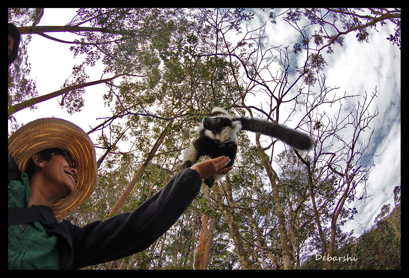 Black & White Ruffed Lemur (rescued) jumped on my hand to take a banana in Lemur Island in Vakona Forest Lodge