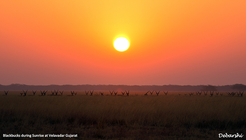 Sunrise at Blackbuck National Park