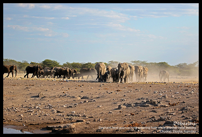 Two Herds of Elephants at Etosha National Park