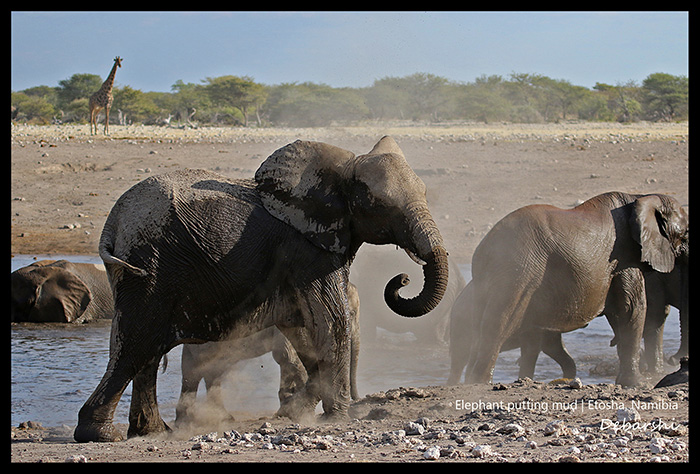 Elephant Leaving the waterhole Etosha National Park