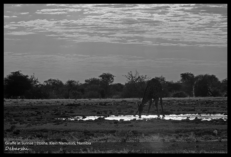 Giraffe at Klein Namutoni at Etosha National Park