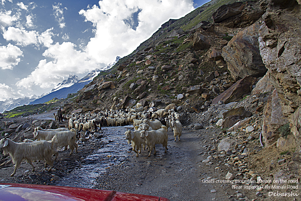 Goats on road crossing mountain stream