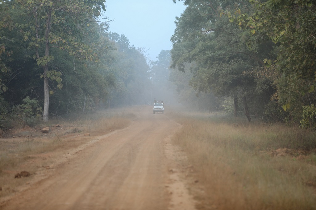 Tadoba dusty roads