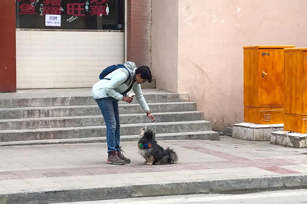 Chandrima finds and plays with someone's dog at Derge