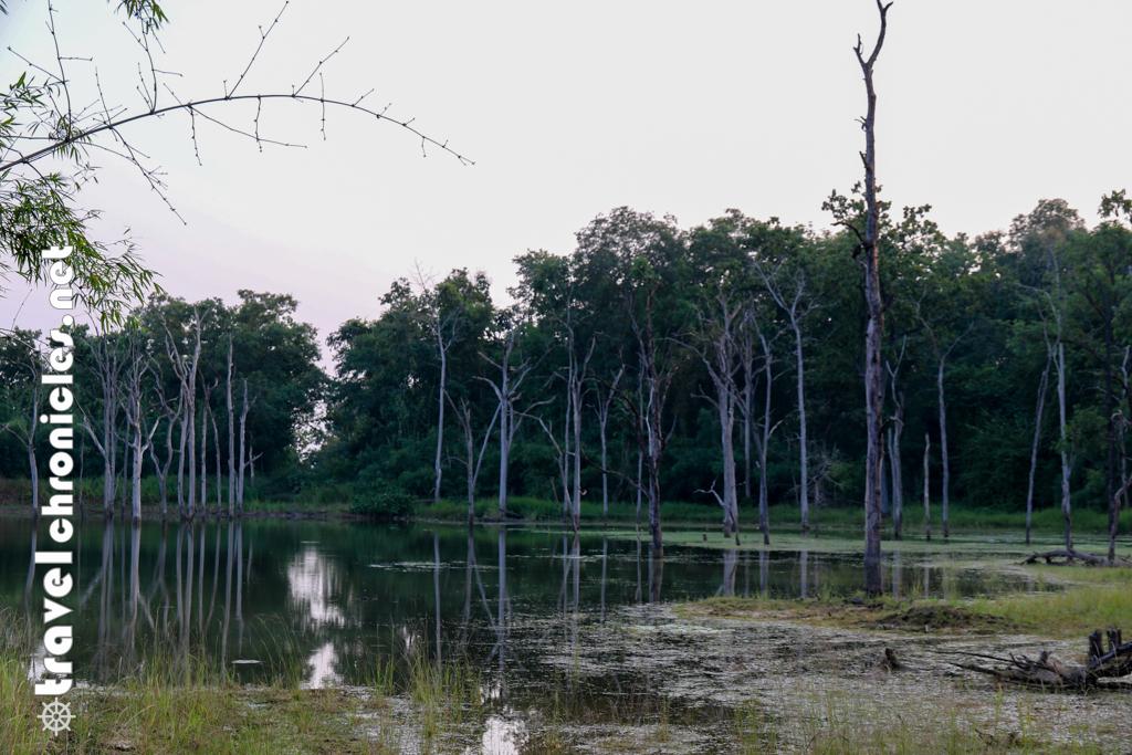 Sidkhada Buffer zone Tadoba