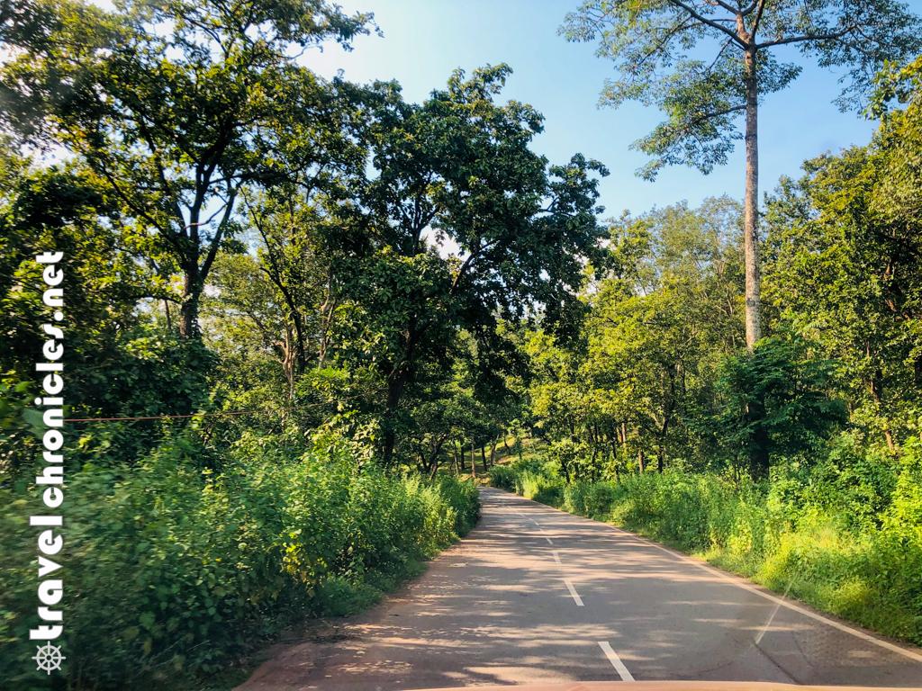 Driving through Saranda Forest